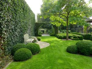 Какой газон использовать: рулонный или посевной?