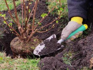Времена года: правильная посадка растений