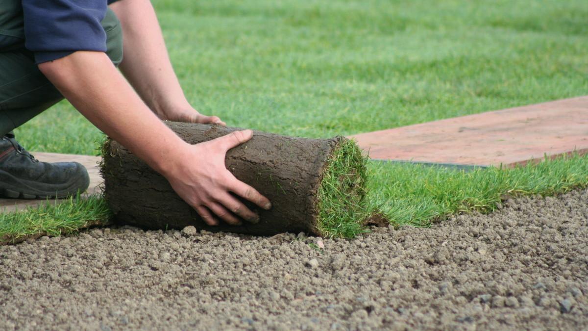 Обустройство газона