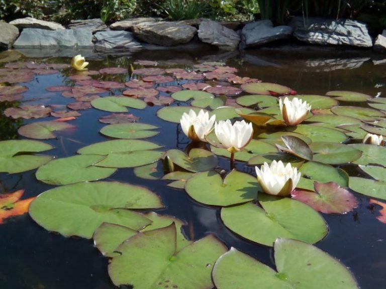 Глубоководные, плавающие растения